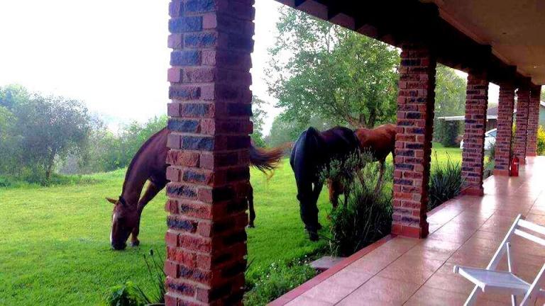 Horses Graze Nearby